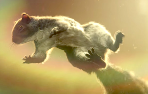 The John Lewis Christmas 2016 advert features a grey squirrel