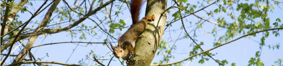 Red Squirrel Education Pack
